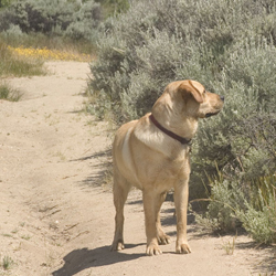 Dog tracking on hiking trail